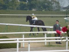 返し馬:ホーカーハリケーン
