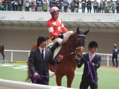 パドック:レッドデセーオと小牧騎手