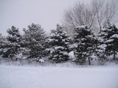 100103_snow(10).jpg