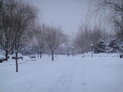 100103_snow(12).jpg