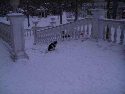 100103_snow(16).jpg