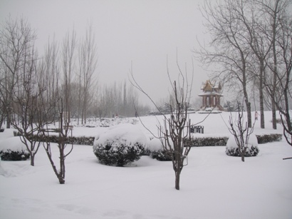 100103_snow(8).jpg