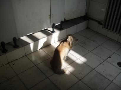 犬1 (2)