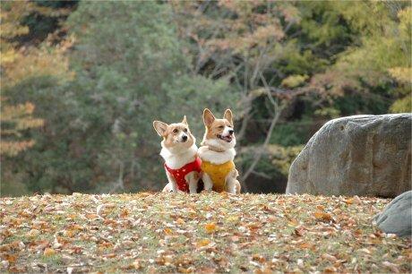 秋ですなぁ?・・・^ ^