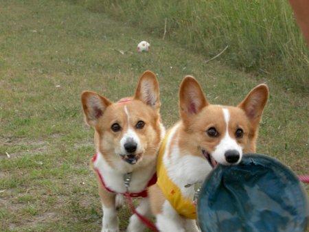 ダンゴ状態で遊ぶ姉妹・・・