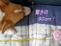 90cm? (≧▽≦)ゞ