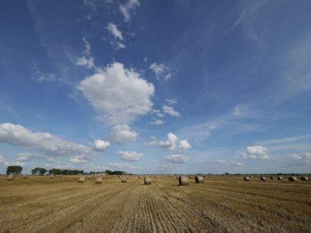 刈り入れの終わった小麦畑 ?