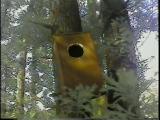 奥の杉巣箱