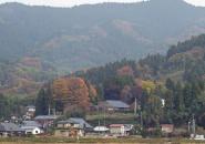 60悠の屋敷林②