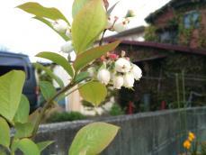 homeberry_01.jpg