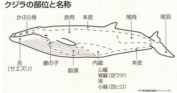 鯨部位の説明