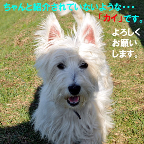 散歩(H210929-2)