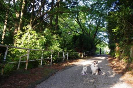 3朝の散歩