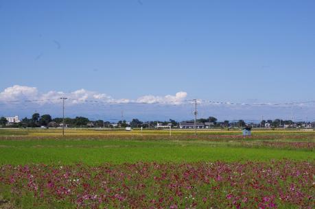 5空とコスモス畑