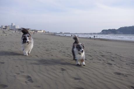 1浜辺を走るアンとウィル