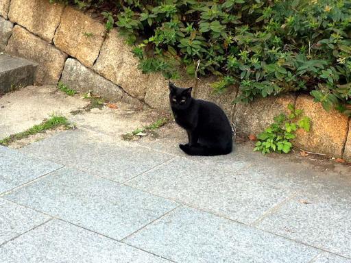 公園のネコちゃん