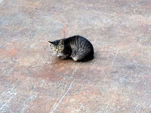 現場のネコちゃん