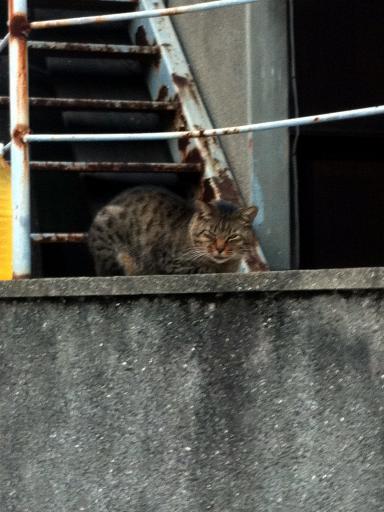塀の上のネコちゃん