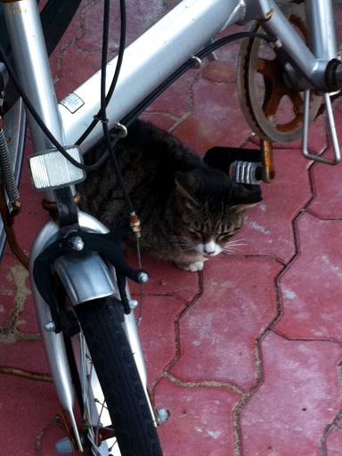 チャリの下のネコちゃん