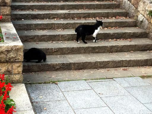 二匹のネコちゃん