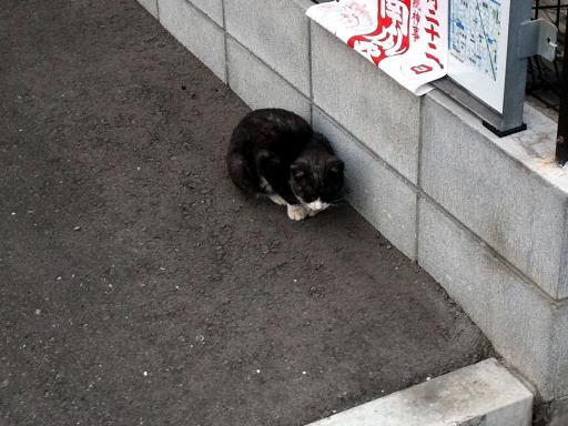 壁際のネコちゃん
