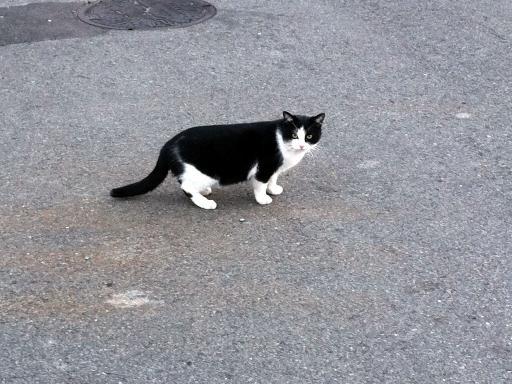 道端のネコちゃん