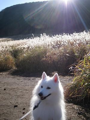 白毛も光ってます。