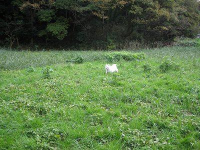 草刈して下さい。