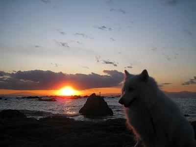 夕日を浴びて