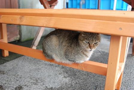 朝市猫メス
