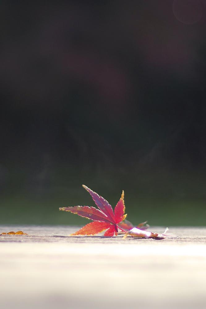shikouji003.jpg