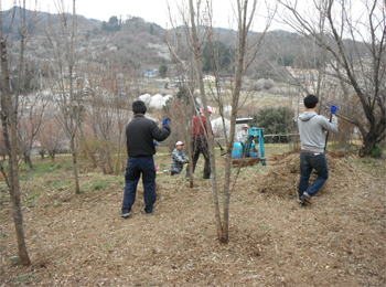 花見山 開花情報 4月13日 023