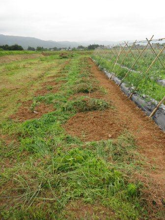 DSCF0291農園7