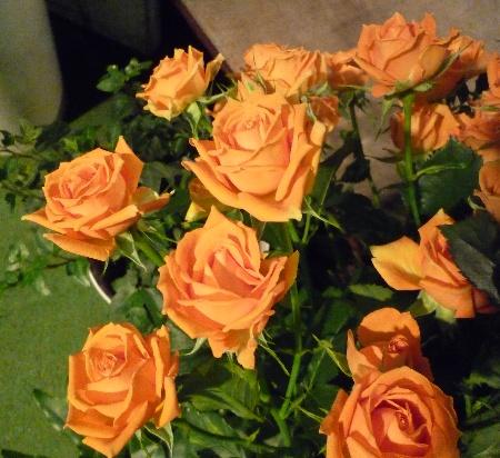 rose 1-2
