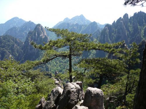 215黄山絶景松