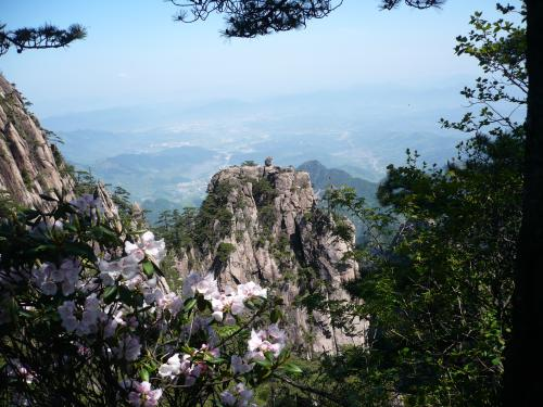 214黄山絶景シャクナゲ