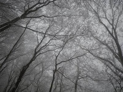 2010-02-06-011.jpg