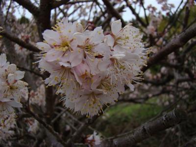 2010-03-13-023.jpg