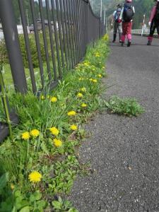 2010-05-04-009.jpg