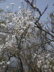 2010-05-05-062.jpg