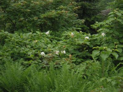 2010-07-04-043.jpg