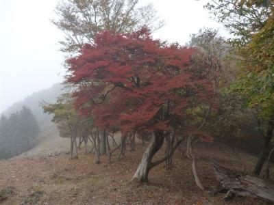 2010-10-24-106.jpg