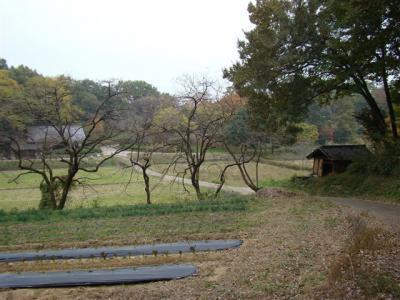 2010-11-13-211.jpg