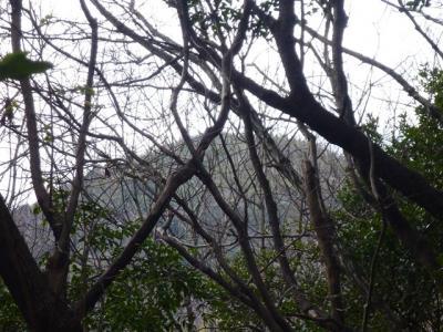 2011-03-16-015.jpg