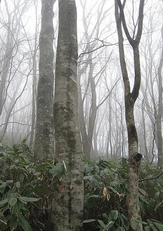 比婆山IMG_4712-1