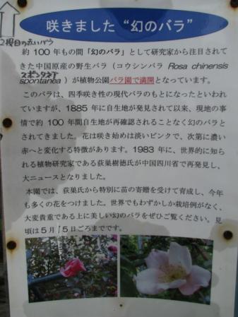 520IMG_5646-1.jpg