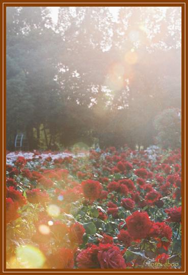 薔薇とゴースト