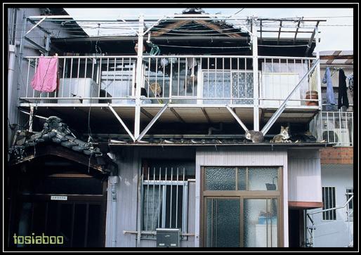 屋根の上の住人