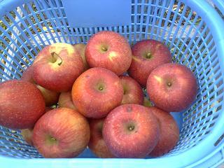 りんご狩り②