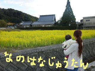 菜の花②じゅうたん